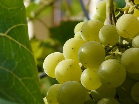 berry-1434403__340