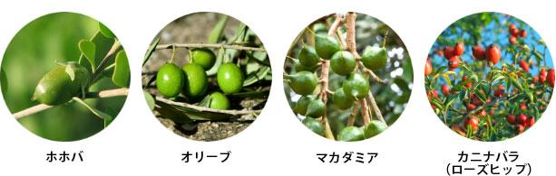 植物オイル4種(ホホバ種子油・オリーブ果実油・マカデミア種子油・カニナバラ果実油)とスクワランをバランス良く配合